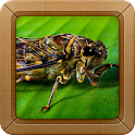 Insect Sounds Ringtone icon