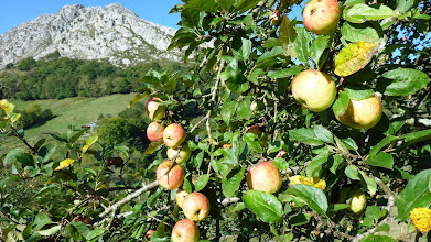 Photo: October; apples ready for harvesting