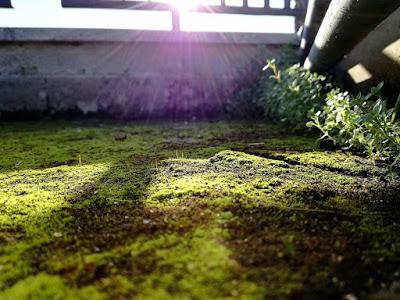 Angoli di terrazzo di Daniele Morelli