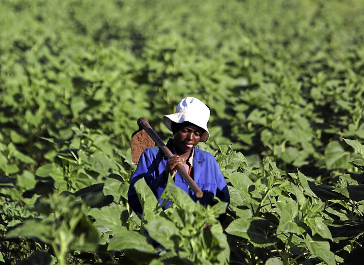 A farmworker shoulders a hoe in the North West province. Picture: ALON SKUY