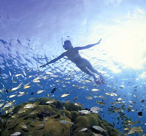 Peek below the surface of the water to glimpse brilliant schools of fish on Dominica.