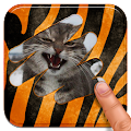 Scratch and guess the animal download
