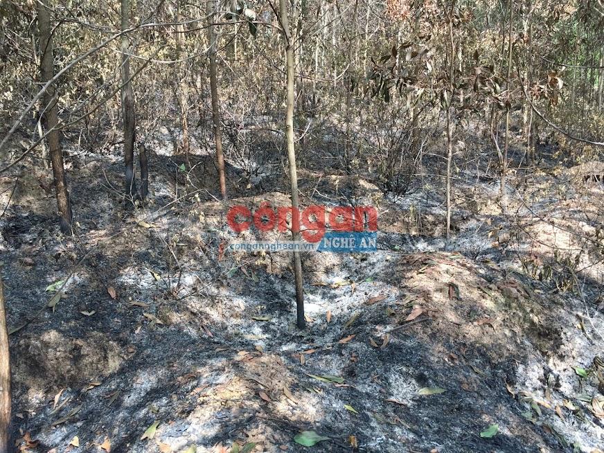 Những cây Keo lá tràm 03 năm tuổi bị Nguyễn Văn Lương đốt cháy