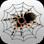 The Tarantula App