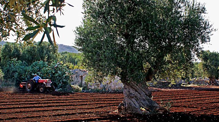 Terra d'Otranto di carlo-bi