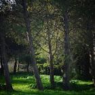TTS Quinta da Piedade