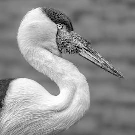by Judy Rosanno - Black & White Animals ( february 2019, san antonio zoo )