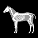 3D Horse Anatomy Software icon