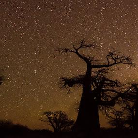 kubu galaxy by Fanie Weldhagen - Landscapes Starscapes