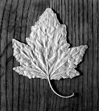 Photo: Star Leaf