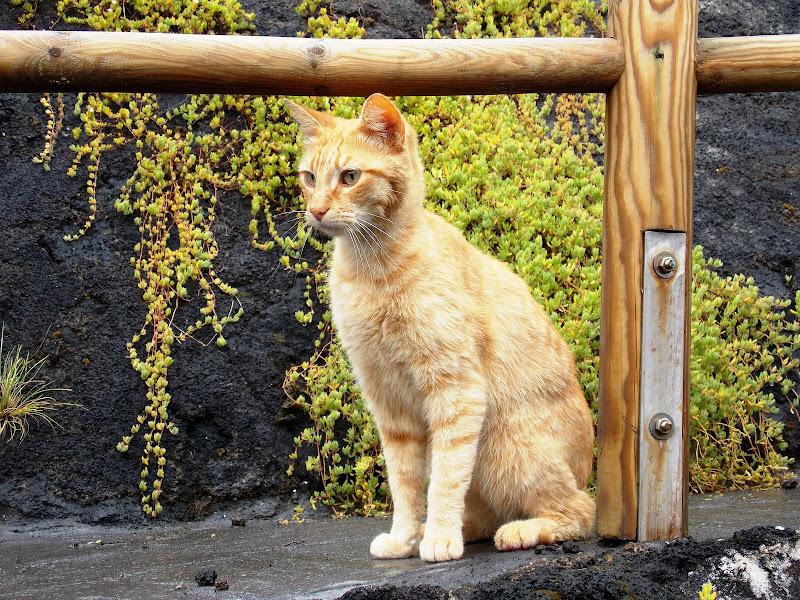 rosso felino di manuwanderer