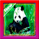 Wallpaper Panda HD APK