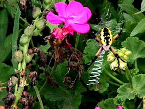 Photo: Garden Spider - Mavica 7