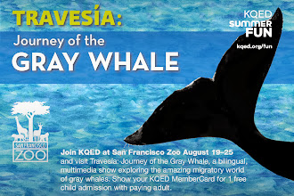 Photo: Join KQED at San Francisco Zoo August 19–25 and visit Travesía: Journey of the Gray Whale, a bilingual, multimedia show exploring the amazing migratory world of gray whales. Show your KQED MemberCard for 1 free child admission with paying adult. http://ow.ly/o4wP5