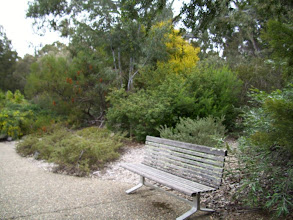 Photo: Barry's Bench: from another angle, note the Banksia Ericifolia behind, and the wattle
