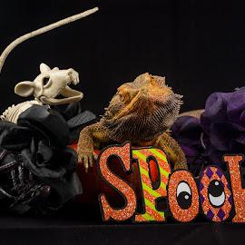 Spooky Dragon by Lourdes Olartecoechea - Public Holidays Halloween ( bearded dragon, halloween, flowers, beardie, rat, witch, reptile, holiday, pumpkin, spider, lizard )