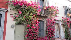 Meet Me in San Miguel de Allende thumbnail