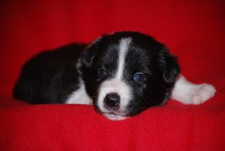 Photo: 3 weeks old