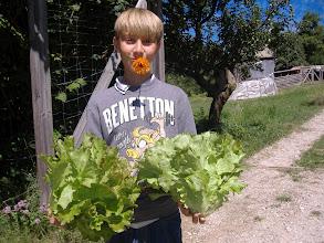 Photo: insalate fresche e....calendula