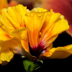 Flower by Fabienne Lawrence - Uncategorized All Uncategorized ( flower photography, macro, flower )