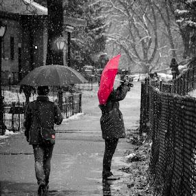 1st Snow Central Park by Chad Weisser - City,  Street & Park  Street Scenes ( winter, weisser photography, snow, manhattan, nyc, new york, central park,  )