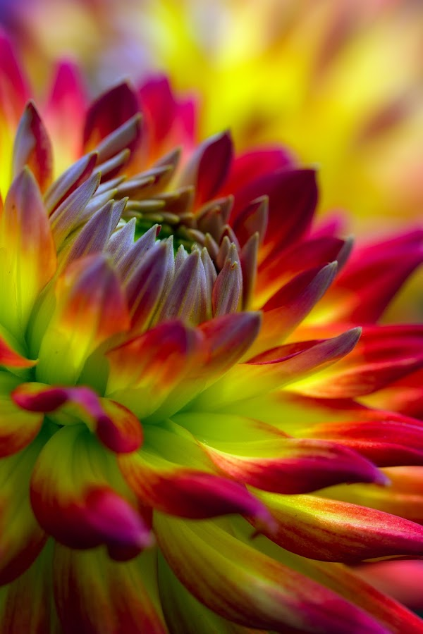she takes me there by JERry RYan - Nature Up Close Flowers - 2011-2013 (  )