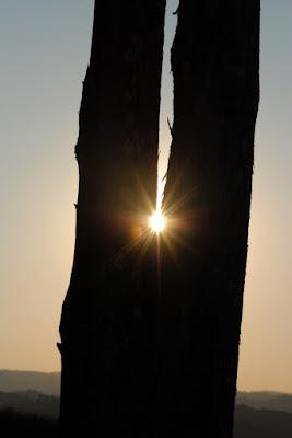 Il Sole è Prigioniero di un Albero! di samuela