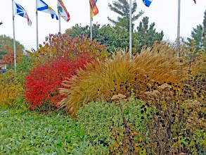 Photo: Never forget about fall colour! There are better shrubs than Burning Bush which offer more interest throughout the season.