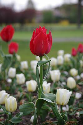 Tulip posing di supertenniss