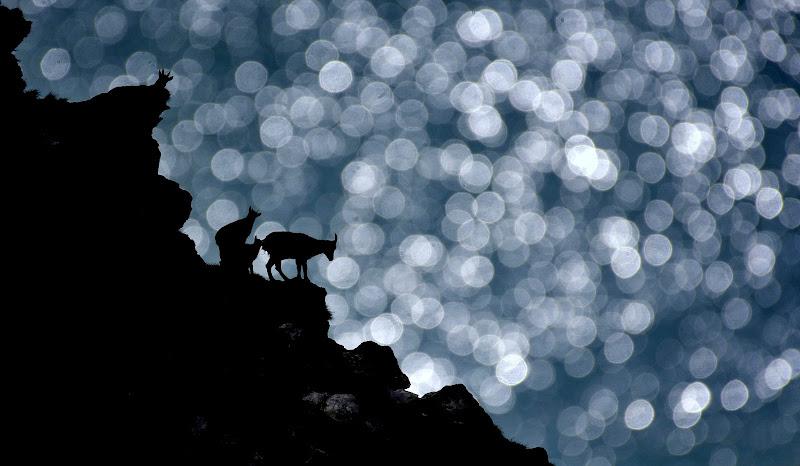 Fantasia alpina. di gigidueelle