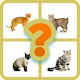 Download GUESS THE CAT? For PC Windows and Mac