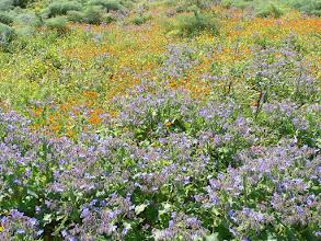 Photo: flower power Sicily in springtime http://www.ferienwohnung-sizilien-weinheim.net/english.html