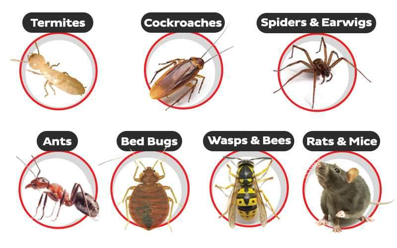 types of pest attack control