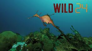 Wild 24 thumbnail