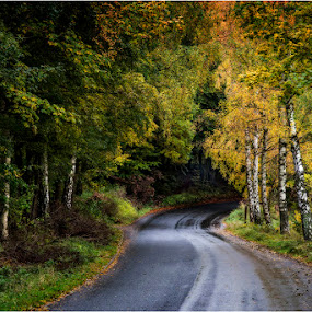 Autumn 2015 by Dusan Vukovic - Landscapes Forests ( nature, autumn, forest, rain )