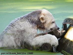 Photo: War wohl nix - Knut versucht den Bisstest ;-)