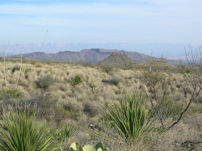 Photo: But the terrain was too rough and prickly for an afternoon hike, with large fields of lechugilla, mesquite, and wait-a-minute bush...