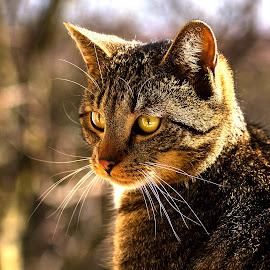 Kuba by Stanley P. - Animals - Cats Portraits