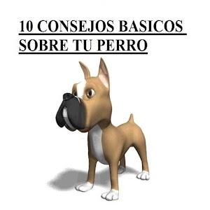 10 consejos sobre tu perro Gratis