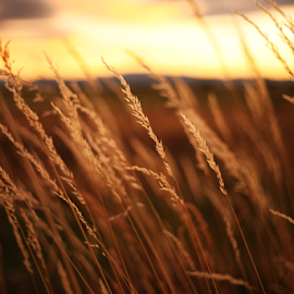 At peace by Shelby Snow - Nature Up Close Leaves & Grasses ( country sunset, golden hour, grass, oregon )