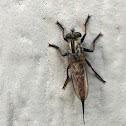 Skimmer bug