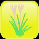 シンプル植物リスト〜身近な野草〜