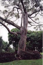 Photo: #021-Jardin botanique de Deshaies