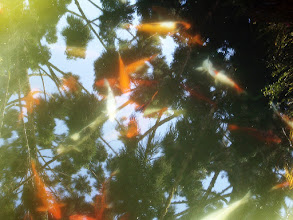 Photo: Reflecting Fish #MirrorMonday Curated by +Catherine Vibert & +Jonny Scholes :- These are no ordinary fish. They are special...they are royal. They are in a pond at Phu Ping Palace (The Winter Palace of the King of Thailand) high up Doi Suthep Mountian in Chiang Mai, Thailand.  Photography by Justin Hill ©