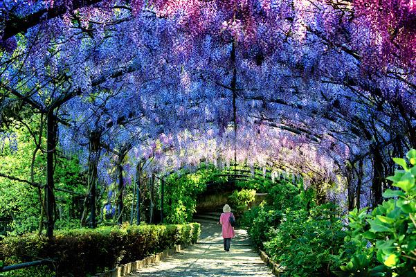 PurpleTunnel di marcopaciniphoto