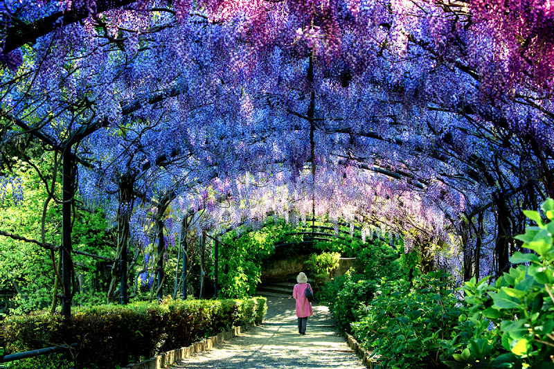 PurpleTunnel di marcopaciniphoto