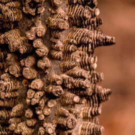 What is That Thing? by Jennifer  Loper  - Nature Up Close Trees & Bushes ( bark, tree, winter, cone shapes, odd )