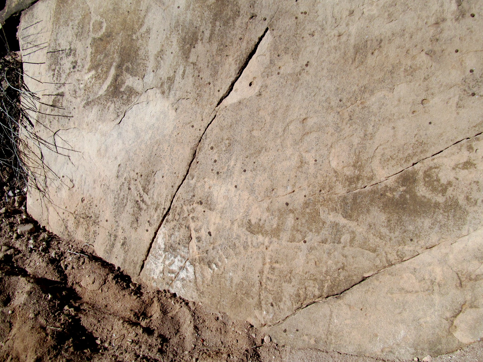 Photo: Previously-buried petroglyphs