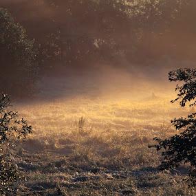 Grass like water by Anne-Cecile Pflieger - Landscapes Prairies, Meadows & Fields ( field, annececilegraphic, tree, grass, fog, dew, meadow, trees, sunlight, prairie, mist,  )