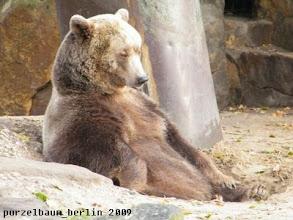 Photo: Der Braunbaer haelt es wie Knut ;-)